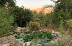 The Botanical garden of Eilat